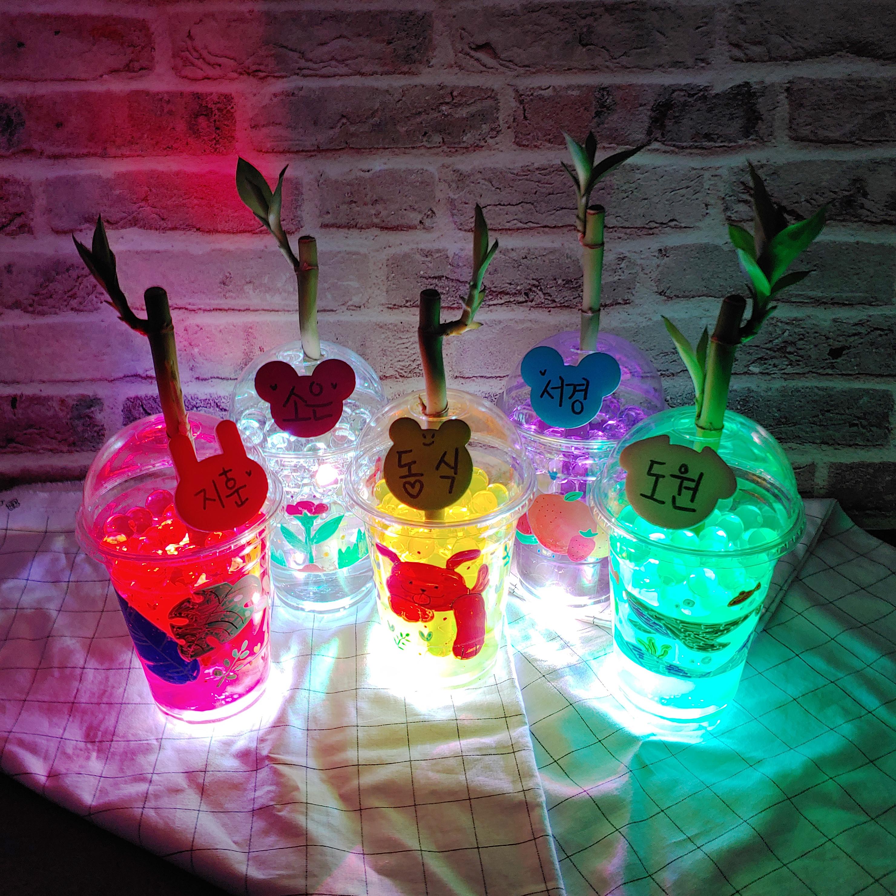 [식물키우기]LED 컵 개운죽 꾸미기-5인
