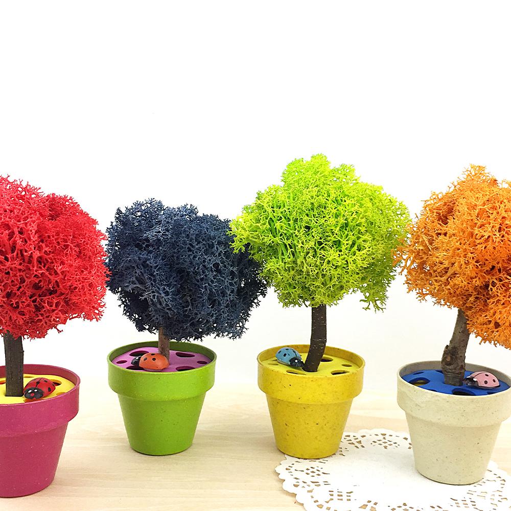 [공기정화]레인디어모스나무화분만들기